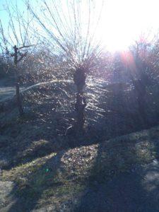 Brillo de Enero al sol